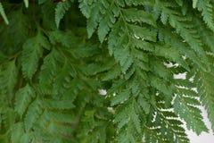 Detail of fern leaf, green background Stock Images