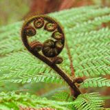 Detail of fern Stock Photography