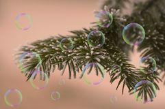 Bubbles and fir branch. Detail of fir branch in the winter with soap bubbles Stock Images