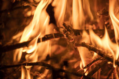 Detail on the fire with burning twigs, logs and leaves Stock Photography