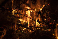 Detail on the fire with burning twigs, logs and leaves Royalty Free Stock Image