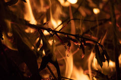 Detail on the fire with burning twigs, logs and leaves Stock Photo