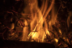 Detail on the fire with burning twigs, logs and leaves Stock Images