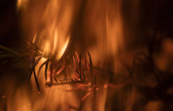 Detail on the fire with burning twigs, logs and leaves Royalty Free Stock Photos
