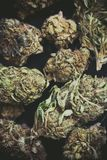 Detail of a flower of marijuana buds. Detail of legal marijuana flowers photographed with a macro lens royalty free stock photos