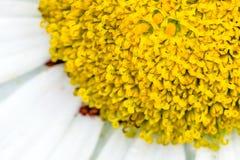 Detail of flower - stigma. Detail of snow lady flower - stigma. Macro photography Stock Photos