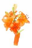 Detail of flowering orange lily Royalty Free Stock Photo