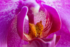 Detail of flowering orchid Stock Image