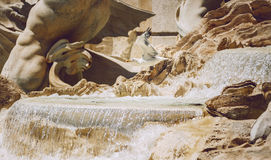 Detail of Fontana di Trevi, Rome, Italy Royalty Free Stock Photography