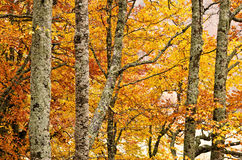 Detail of forest in autumn stock photo