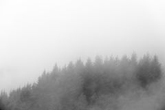 Detail forest with fog Royalty Free Stock Photography