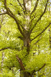 Detail of a Forest Royalty Free Stock Image