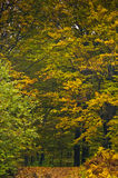 Detail of forest path in autumn colors, forest at mountain Goc Royalty Free Stock Images