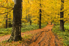 Detail of forest path in autumn colors, forest at mountain Goc Royalty Free Stock Photography