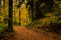 Detail of forest path in autumn colors, forest at mountain Goc Stock Images