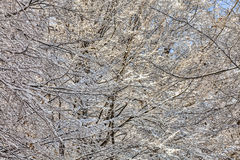 Detail of a Forest in Winter Stock Photo