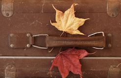 Vintage Dusty Suitcase. Detail of forgotten vintage dusty suitcase with two dry maple autumn leaves Royalty Free Stock Photos