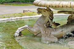 Fountain in the park - landmark attraction in Rome, Italy Royalty Free Stock Image