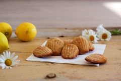 Detail of french sweet homemade pastry madeleines with lemon zest. Detail of french sweet homemade pastry dessert madeleines with lemon zest, next to lemons and Royalty Free Stock Photography