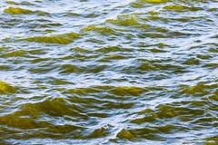 Detail of fresh brackish green water Stock Photos