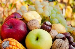 Detail of fresh colorful autumn fruits Royalty Free Stock Image