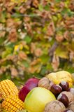 Detail of fresh colorful autumn fruits and vegetables Royalty Free Stock Photo