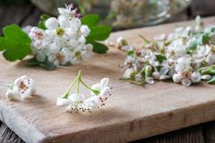Detail of fresh hawthorn flowers on a table royalty free stock image