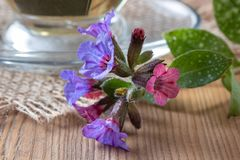 Detail of fresh lungwort flowers on a table royalty free stock image