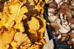 Detail of fresh mushrooms