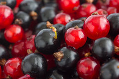 Detail of freshly picked red and black currants Royalty Free Stock Photography