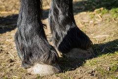 Detail of front hooves horse Royalty Free Stock Photos