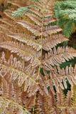 Detail of frozen leaf fern Stock Images
