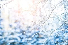 Detail of frozen tree branches with defocused background Stock Photo