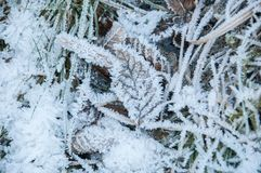 Detail of frozen vegetation. On the ground Stock Images