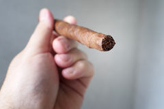 Detail of a full length Toscano cigar Royalty Free Stock Photos