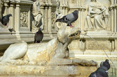 Detail of Gaia Fountain from Siena, Italy. A stone dog fountain with doves Stock Photos