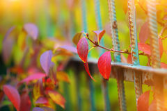 Detail of garden fence with colorful vegetation. In Autumn season Stock Image