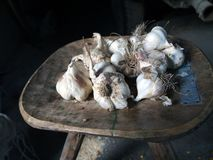 Detail of garlic Stock Images