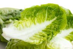 Detail of gem lettuce leaf Stock Photos