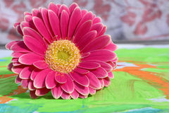 Detail of gerber daisy on a colorful child painting ,gift for Mothers day or birthday present Royalty Free Stock Photos