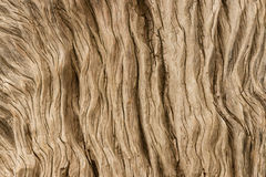 Detail of gnarled tree Royalty Free Stock Images
