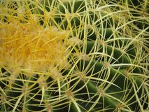 Detail Golden Barrel cactus, desert Southwest U.S. stock photography