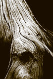 Detail of grainy tree