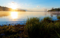 Detail of grass halm at a lake in magical morning time with dawning sun. Royalty Free Stock Image