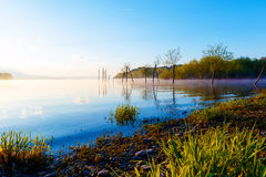 Detail of grass halm at a lake in magical morning time with dawning sun. Stock Image