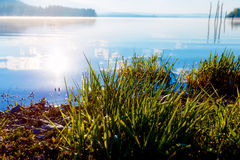 Detail of grass halm at a lake in magical morning time with dawning sun. Stock Photos