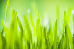 Detail of grass Stock Photography
