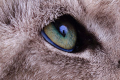 Detail of green cat eye Stock Photos