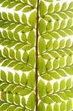 Detail of green fern. Fractal design of nature Stock Photo
