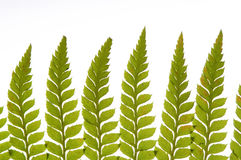 Detail of green fern Stock Photos